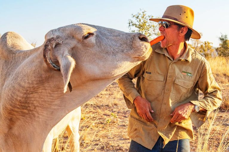 5 Phil, an Adventure Wild Kimberley Tours guide, feeds 'Moo', a local docile Brahman cow at Home Valley Station, Gibb River Road, The Kimberley - Day 4